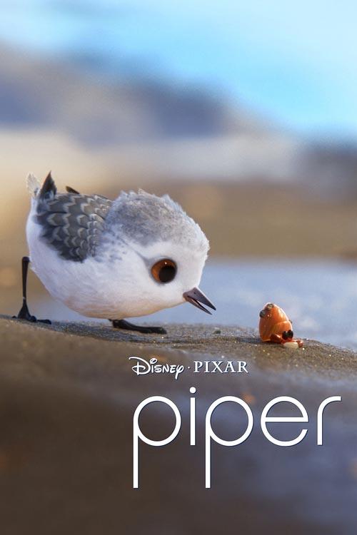 Piper 2016 - دانلود انیمیشن جوجه کبوتر